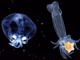 Luminous deep sea creatures